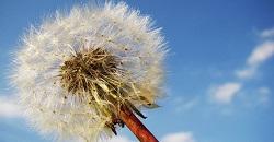 תביעת גט בשל ספירת זרע נמוכה